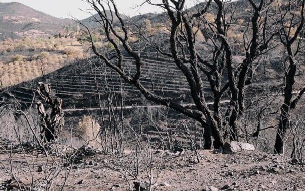 Immagine di copertina di: Niente campagna antincendio per mille operai di Forestas